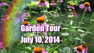 Garden Tour July 10, Three Sisters, Butternut Squash, Heirloom Tomatoes, More