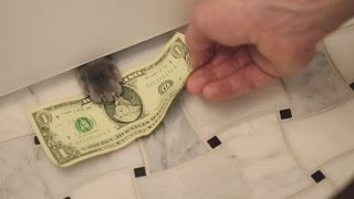 My Cat Charges Me For Toilet Paper thumbnail