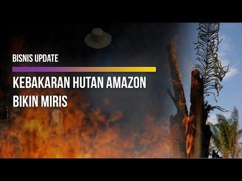Kebakaran Hutan Amazon Capai Rekor Tahun Ini