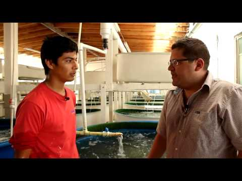 San Quintin - Seafood Farming