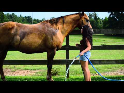 How To Wash A Nervous Horse