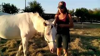 Double D Horse Rescue - Rhome Texas