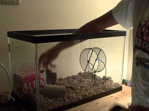 How To Clean A Hamster Cage Tank