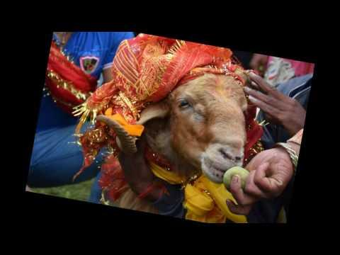 Nanda Raj Jat Yatra of Uttrakhand