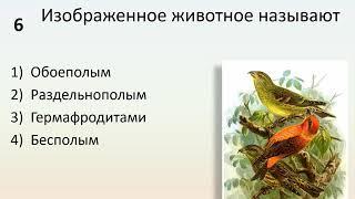 Б6 19 Половое размножение животных