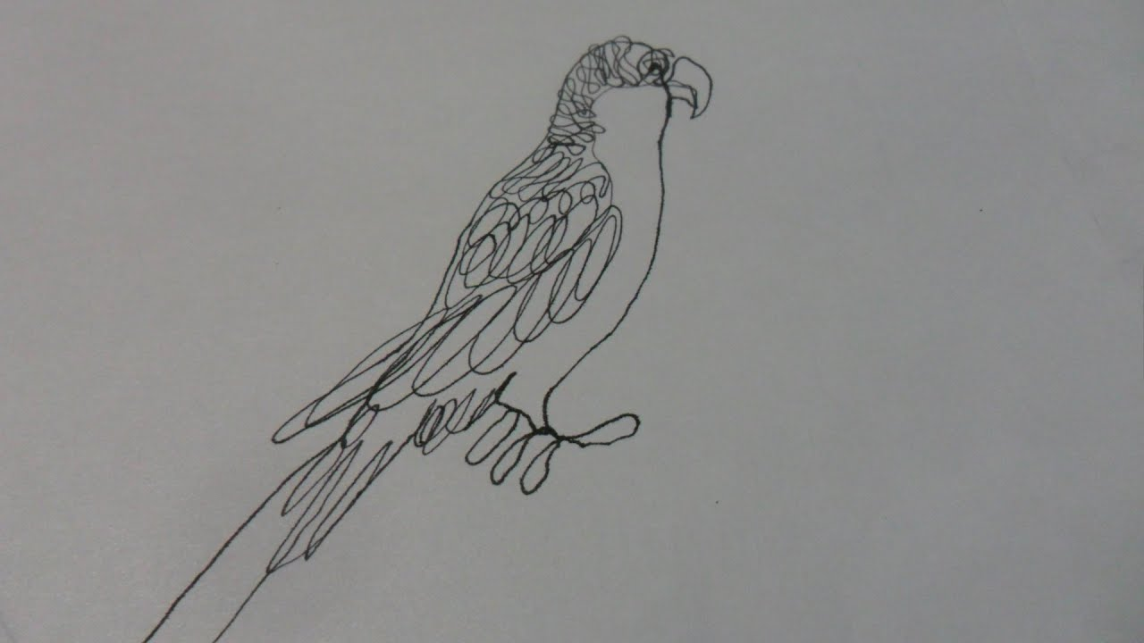 Como Dibujar Un PERICO Australiano Con Una Sola Línea