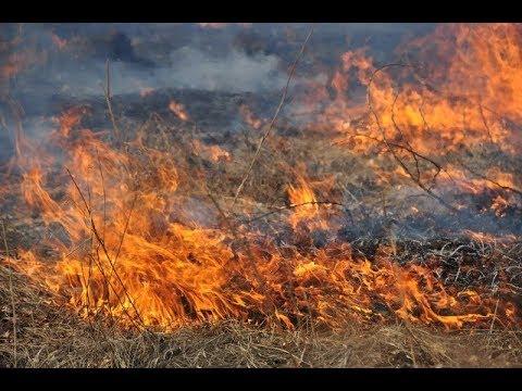 Новости 7 канал Одесса: В Одеській області оголосили надзвичайну пожежну небезпеку