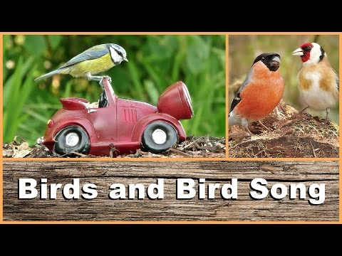 Birds, Bird Song and Sounds : Entertainment for Cats