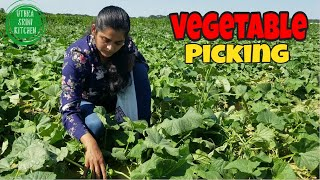 Farm Visit :  Pick your own  Vegetables | Vegetable Picking | Farm visit 2020