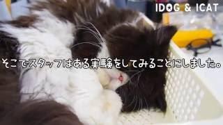 iDog&iCatの看板猫、ムックは蛇口からよくお水を飲みます。 そこでスタ...