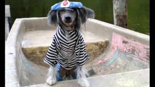 Стой, кто идет. Видео собак в одежде на DogStyle