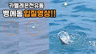 카멜레온튜닝찌 입질영상