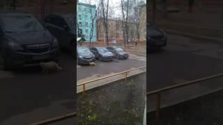Реутов! Вот так люди вываливают собак, на детской площадке.....