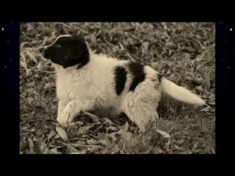 From Zero To Hero - Kira rescued frisbee dog