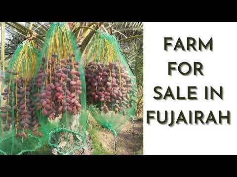Farm for sale in Fujairah Emirate of UAE | Buy a profitable farm in United Arab Emirates!!