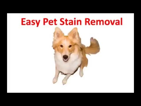 Fast Pet Stain Removal Wilbraham MA 01095