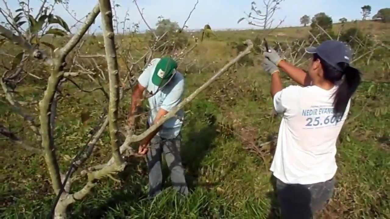 Aprenda a fazer a poda de árvores de forma correta: dicas ...