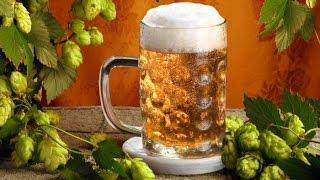 видео Что такое пивной напиток и чем он отличается от пива