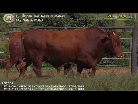 LOTE 037