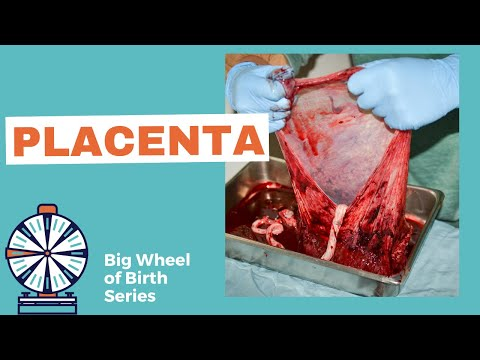 PLACENTA: Function of the placenta, what is placenta previa and what does it mean, anterior placenta