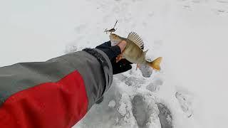 Удачная двухчасовая зимняя рыбалка