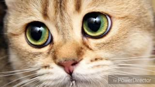 Грустные песни про кошек