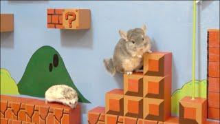"""ペット達に""""マリオ""""のステージを作ってみた!ハリネズミ、チンチラ【DIY】Making SUPER MARIO STAGE for chinchilla and hedgehog !!"""