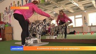 В Саранске открыли зал для хендлинга