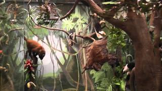 видео Где в Москве находится зоологический музей им. Н.М. Кулагина?