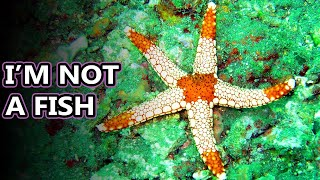 Starfish facts: really they're sea stars | Animal Fact Files