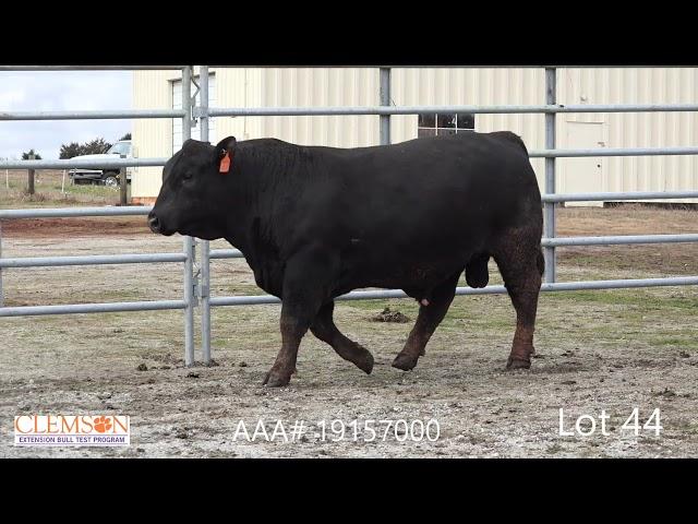 Clemson Extension Bull Test Lot 44