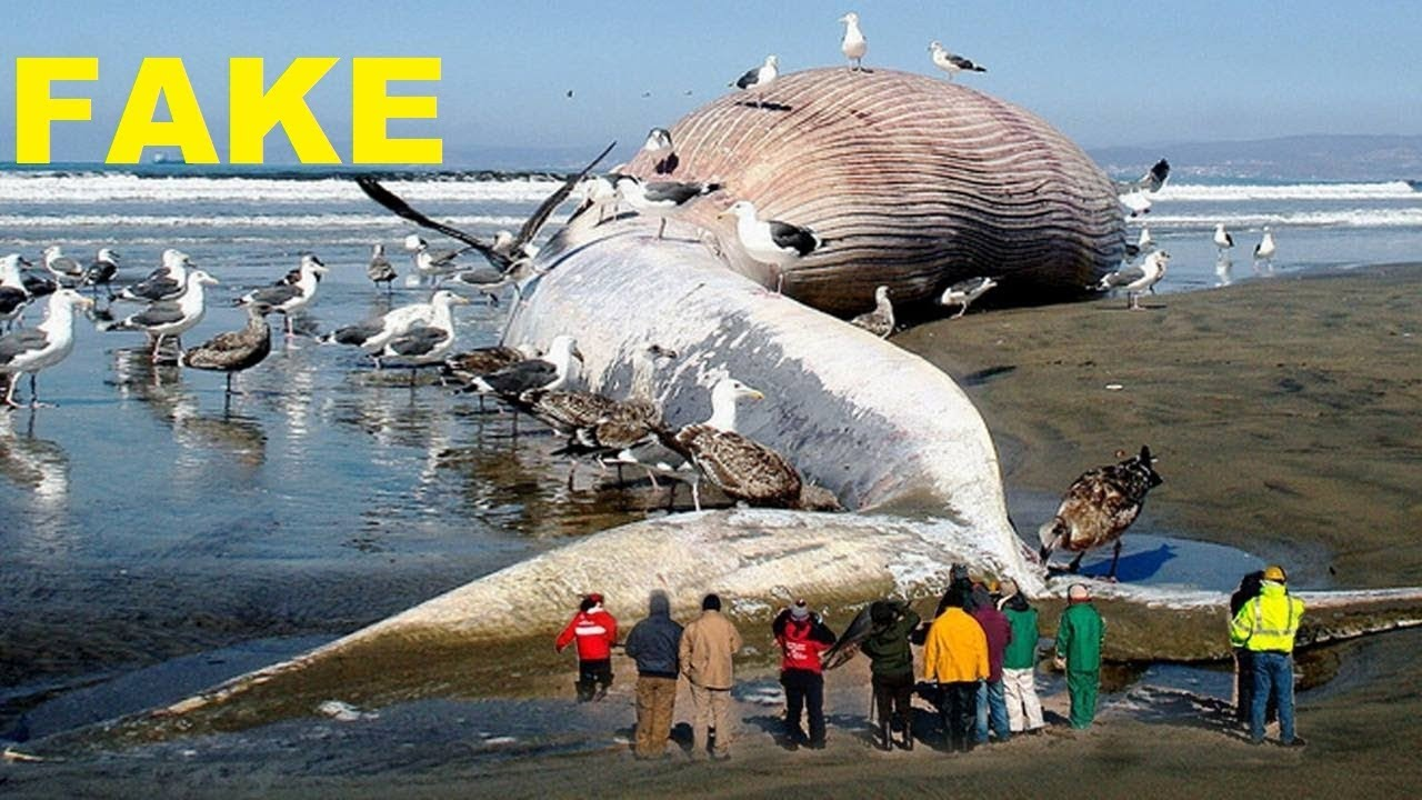World biggest Animal 2017 Fake video | Sea animal to ever ...