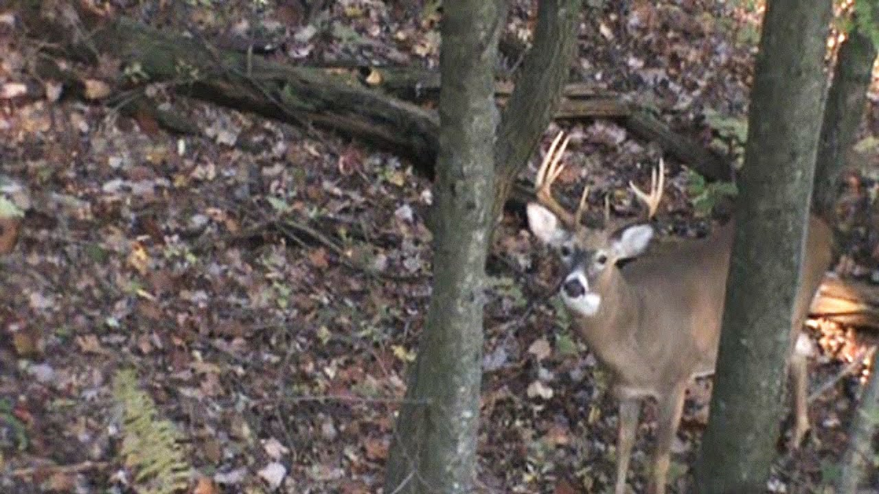 10 Point Buck Bow Hunt 2011 Pennsylvania Youtube