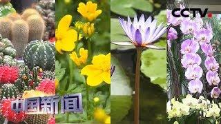 [中国新闻] 台彰化县花卉业繁荣 劳动力外流成持续发展瓶颈 | CCTV中文国际