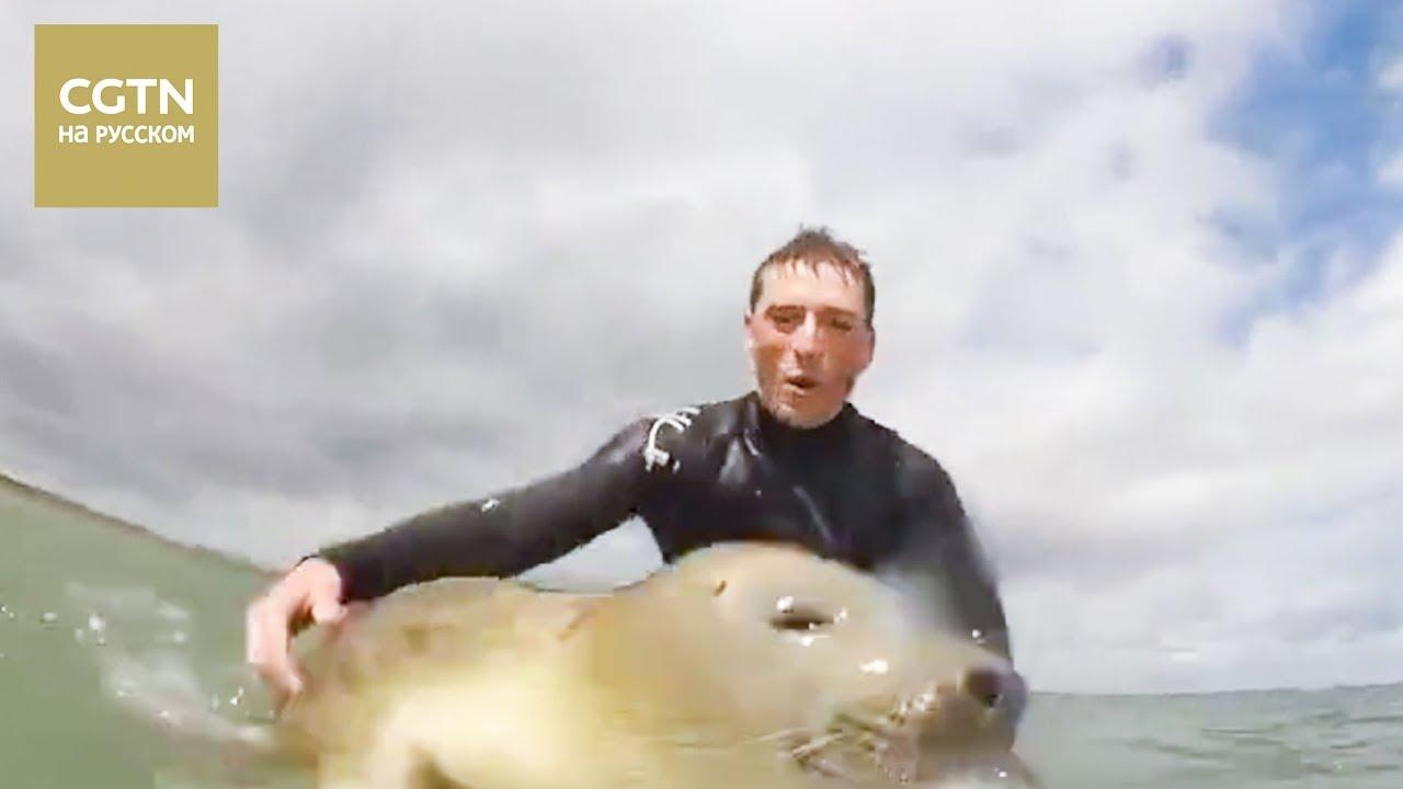 Тюлень-серфингист катается на волнах вместе с другими серферами [Age 0+]