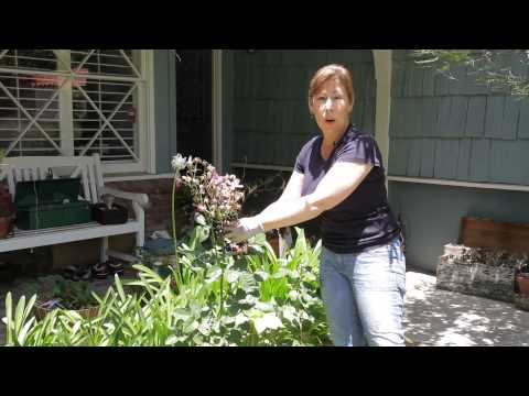 How to Trim Dead Blooms From a Rose Bush : Garden Space