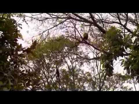 Zoo stars animals : Sao Paulo Zoo
