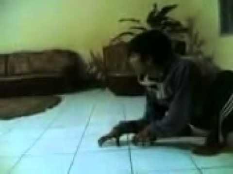 The Merinding Series: Bekerja Dengan Ditemani Harimau Siluman Penunggu Sungai...