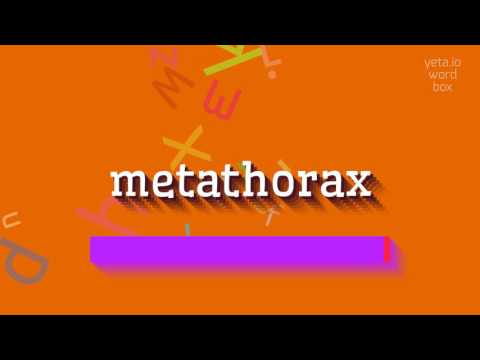 "How to say ""metathorax""! (High Quality Voices)"