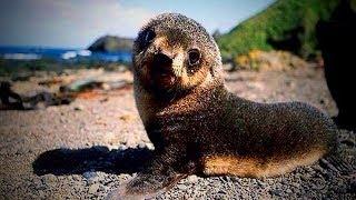 Funny Seals 😹 Funny and Cute Seals (Part 1) [Funny Pets]