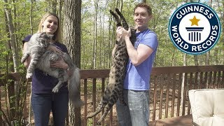 Tallest cat and longest tail live together - Meet the Record Breakers