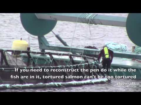 Cooke Aquaculture's Recipe for Tortured Salmon