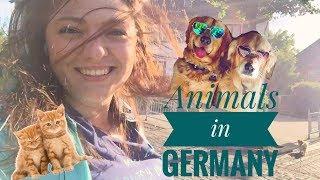 Животные в Германии / Как немцы относятся к собакам / Собака