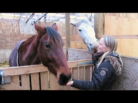 Equine 'Pain Face' Explained - Dr Karina Bech Gleerup