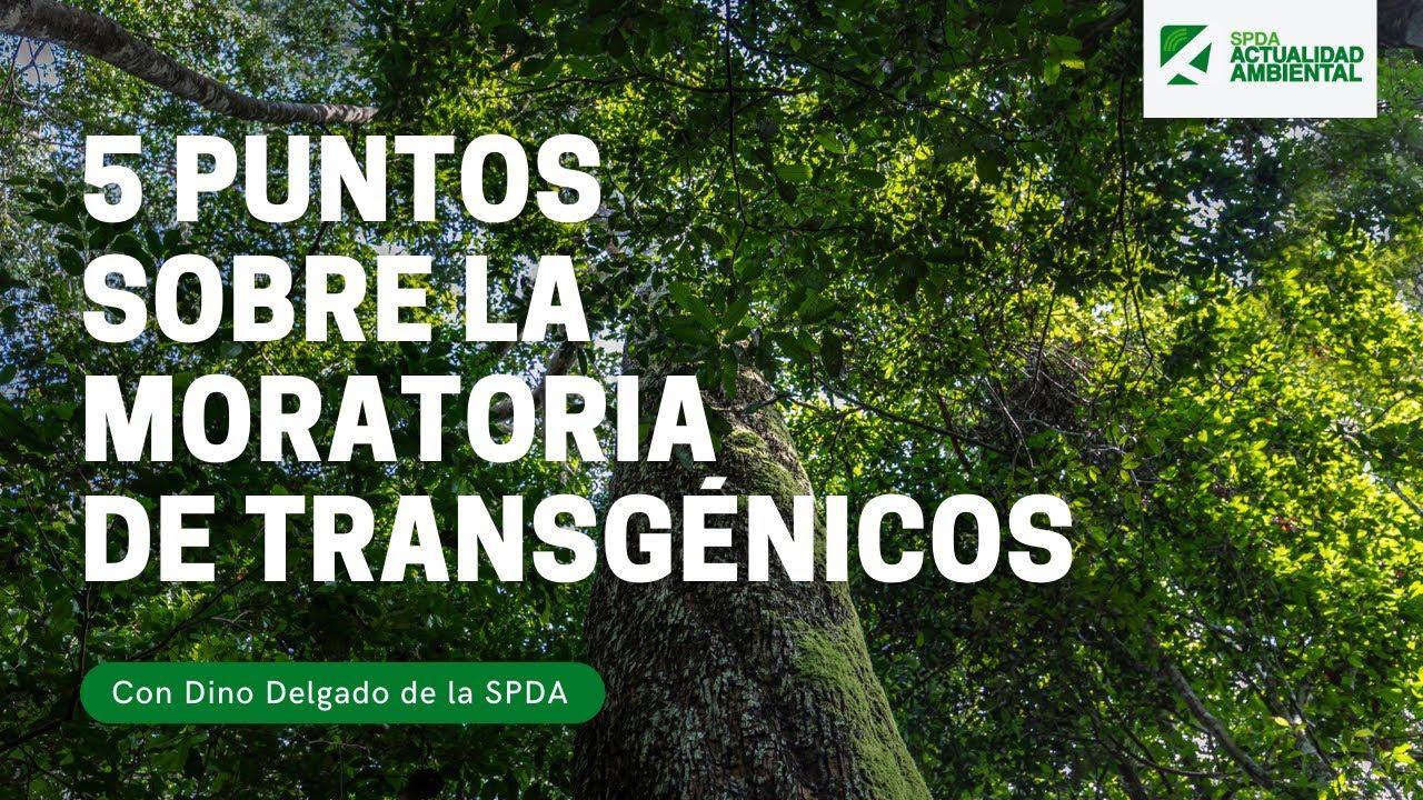 5 puntos sobre la extensión de la moratoria al ingreso de OVMs al Perú.