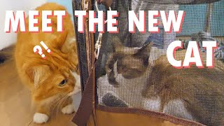 Our cats meet Pichi!