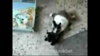 Самое прикольное видео Кролик лезет к коту)))