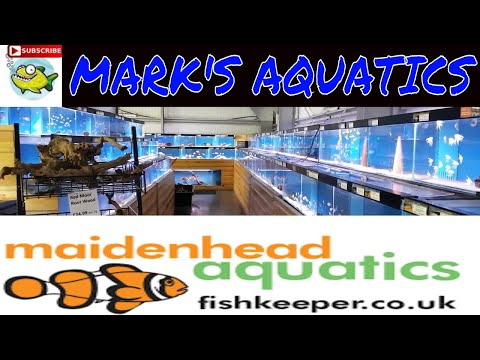TRIP TO MAIDENHEAD AQUATICS  ANOTHER LOCAL FISH STORE👍😀