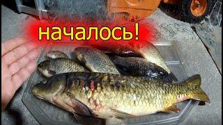 Рыбалка началась Ячейка 90 миллиметров работает Сазан прет Карась влетает