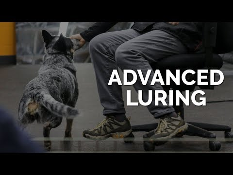 Advanced Luring